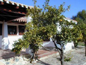 Orangenbaum011225